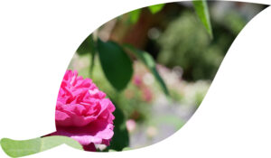 Gärtenabteilung BSV
